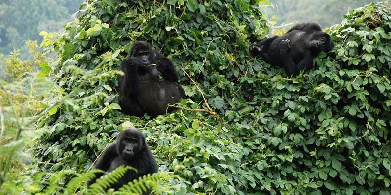5 Days Uganda Safaris