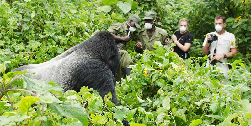 what to pack for a gorilla safari